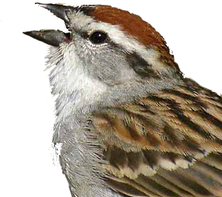 WildLifer Bird